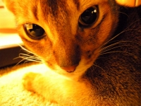 2010.4.1azumona 035.jpg