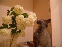 2010.6.7azu,flores 014.jpg