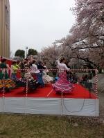 20130331_さくらまつり3 (600x800).jpg