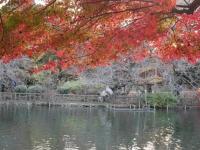 2014.11.28まで井の頭公園紅葉 068 (1024x769).jpg