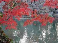 2014.11.28まで井の頭公園紅葉 069 (1024x769).jpg