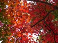 2014.11.28まで井の頭公園紅葉 073 (1024x769).jpg